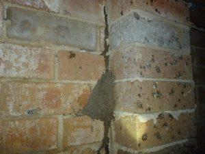 termite mudding tubes
